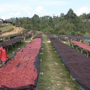 Burundi natural coffee